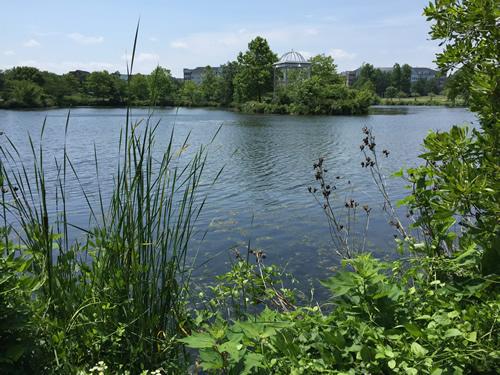 Ben Brenman Pond