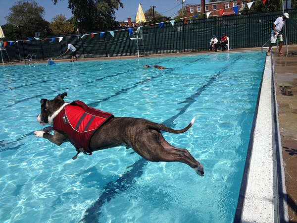 Dog Day Swim