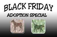 Black Friday Adoption Special