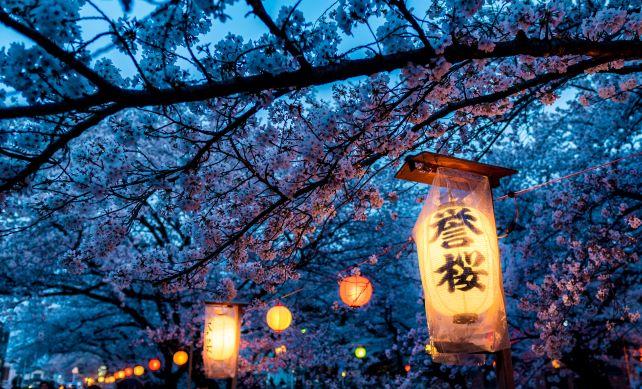 Cherry blossoms and lanterns in Kawagoe, Japan.
