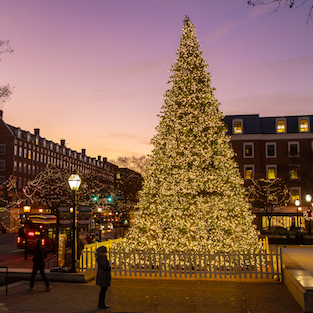 City Holiday Tree in Market Square